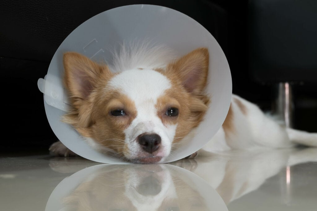 the cone of shame is tough on dogs, and it can be tough on your walls too!
