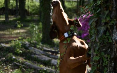 The Rebarkable Dogs: A Coonhound Called Shelbutt– uh – Shelby.