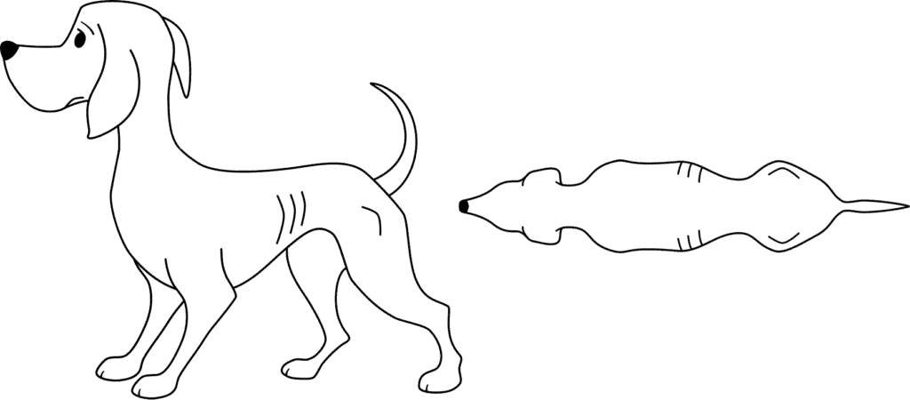 body shape for an underweight Skinny Dog
