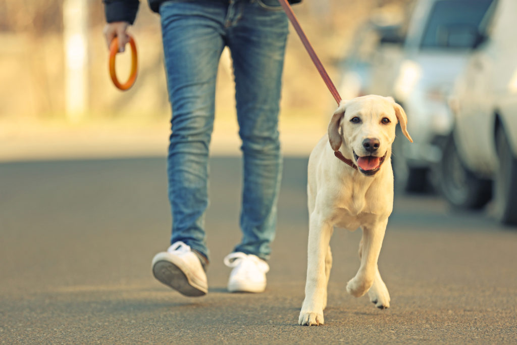 Even as a teenager, less exercise is required to ensure the happiness, health and to avoid behavioural issues for your dog.