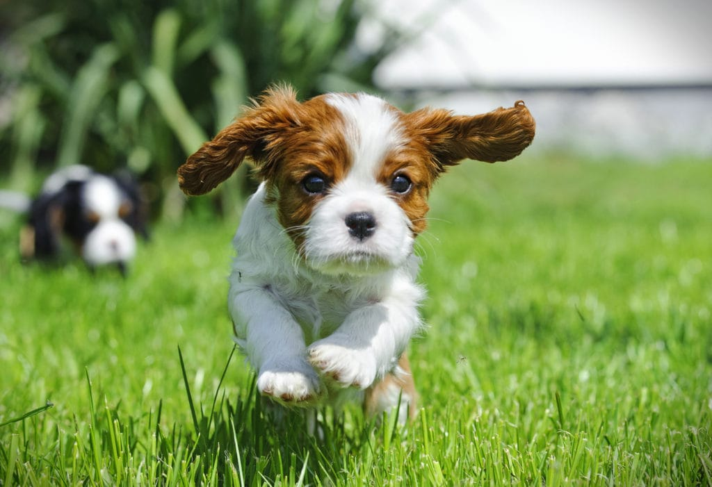 it doesn't matter how cute your puppy is, the puppy blues can strike anyone and everyone