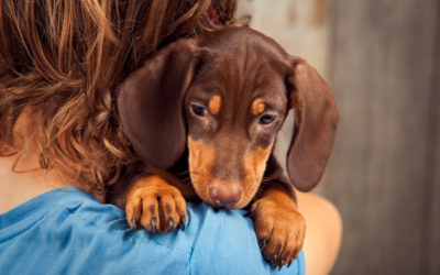 Puppy Blues Research Quiz – Help Us Find Out More