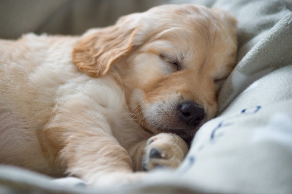 Let sleeping dogs lie... because at least then you get a break.