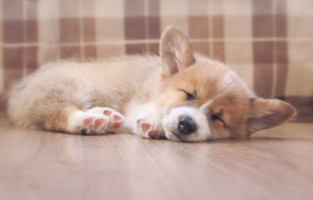 sleep is the goal! You can totally get there once you understand when your puppy will sleep through the night