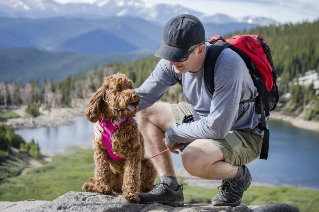 no matter what breed, the ruffwear front range harness is a great option