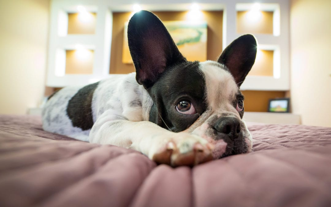 When Will My Puppy Sleep Through The Night? With 4 Steps To Help Your Puppy Sleep Longer.