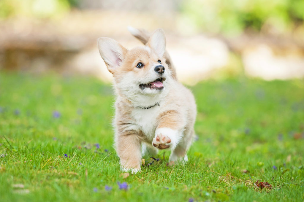 an off leash walk is still a walk! Just make sure your puppy has their recall in order